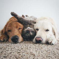 Tre amici per la pelle: due cani e un gatto amano fare tutto insieme