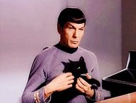 Mr. Spock  And Mr. Cat