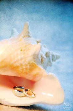 Wedding Rings in Sea Shell Beach Wedding beach summer Wedding Wishes, Friend Wedding, Wedding Pictures, Perfect Wedding, Dream Wedding, Wedding Day, Wedding Dress, Seaside Wedding, Destination Wedding