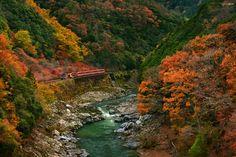 Romantic Train by Jkboy Jatenipat on 500px   Sagano Scenic Railway en otoño en Arashiyama, Kyoto, Japón.