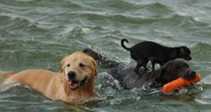 Lucy isn't as keen on the water as Millie is, but she found a way to stay a part of the pack!