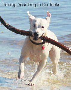 Training Your Dog to Do Tricks