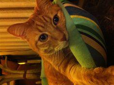 Ollie, sulking for more treats.