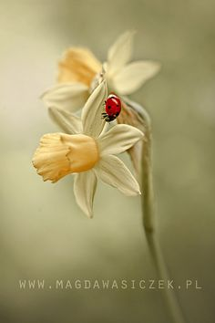 SPRING 2014 by Magda Wasiczek Nature and Art Photography, via Flickr