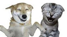 Come laugh your tail off with our hilarious pet humor every Tuesday!  https://www.facebook.com/NolasFinestPetCare www.nolasfinestpets.com