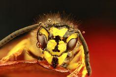 Wet Wasp