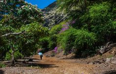 15 Easy And Enchanting Hikes In Hawaii Under Two Miles