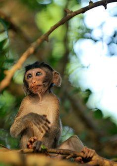 Monkey @danilove_xo