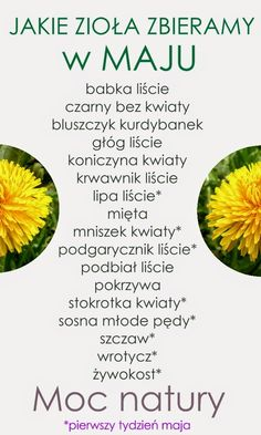 Jakie zioła zbieramy w maju? Kitchen Witch, Beauty Care, Health And Beauty, Natural Remedies, Herbalism, Food And Drink, Health Fitness, Healthy Recipes, Cooking