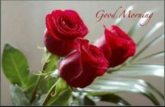 Good Morning Messages and Words of Love - Morning Images Love Morning Image, Good Morning Picture, Good Morning Flowers, Morning Pictures, Good Morning Images, Good Morning Quotes, Morning Memes, Status Wallpaper, Rose Wallpaper