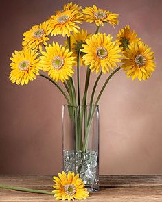 """{$tab:description} Brighten the day Bright and cheery, our Gerbera daisy stems capture the warm easy-going feeling of a Summer day. Display these stems together in a vase for a colorful floral mix perfect for your kitchen table or window sill. {$tab:details}  20"""" length 4"""" (bloom) in diameter Create your own bouquet Available in five colors Vase and accessories sold separately Select from a variety of vases below Shown - 11 stems in our Square vase Shown with our two bags clear glas..."""