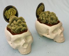 malformalady:  Skull planter with brain cactus — a morphological variant of the species Mammillaria elongata, normal cacti can be substituted for brains $20.00