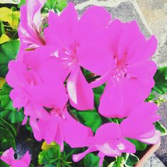 #pink#flowers
