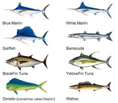 Names of Fish to Eat
