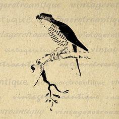 Digital Printable Hawk Graphic Bird by VintageRetroAntique on Etsy