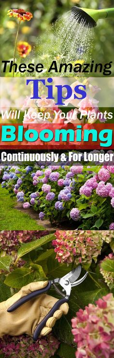 These 11 essential tips will help keeping your bright and colorful flowering plants blooming, and for longer. Must check out!