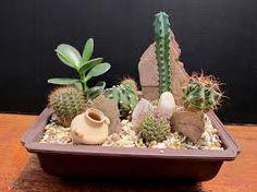 cactus y suculentas Succulents In Containers, Cacti And Succulents, Planting Succulents, Cactus Plants, Cactus Terrarium, Garden Terrarium, Mini Cactus Garden, Succulent Gardening, Cactus Flower