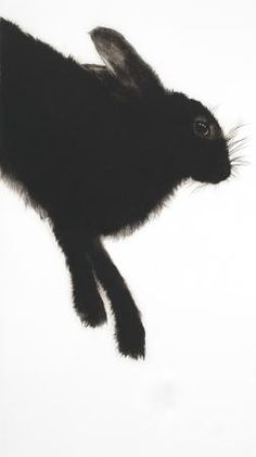 """Hare . Dry-point Engraving on Arches Moulin du Gue paper . 24"""" X 13.5""""  Edition of 20 . Sarah Gillespie"""