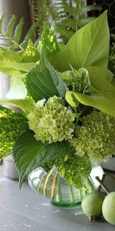 Green flowers (hydrangea), ferns, and perfectly over-sized leaves combine in this boldly energetic bouquet. Ikebana, Green Flowers, Beautiful Flowers, Green Plants, Beautiful Boys, Green Leaves, Hortensia Hydrangea, Hydrangeas, Delphinium