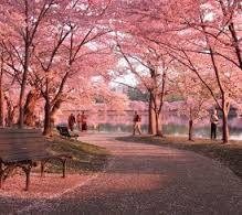 National Arboretum: Virtual tour.