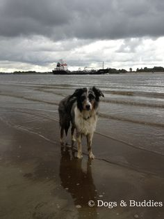 Ein Tag am Elbstrand - Falkensteiner Ufer– Hansestadt Hamburg - Hamburg - Strand - Hundeblog - Hundeblogger - Dogblog - Dogblogger - dogsundbuddies.com