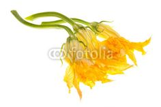 Zucchini Flowers On White