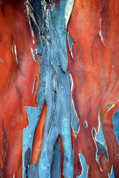 Crapemyrtle Bark III Abstract Nature, Abstract Art, In Natura, Texture Photography, Visual Texture, Tree Trunks, Colour Pallete, Tree Bark, Natural Texture