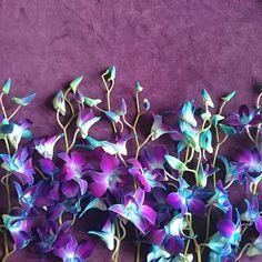 2018 pantone color of the year, pantone color of the year 2018, purple and green flowers on purple background, pantone ultra violet, bright purple, dark purple, violet, mint green
