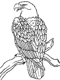 coloring page eagle 01