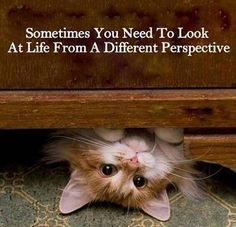 Sometimes you need to look at life from a different perspective.