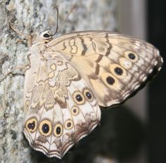 always thought moths were very beautiful