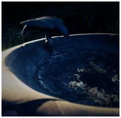 "Day 445: ""Dry Bathing""   www.BuuckPhotography.com"
