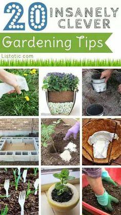 20 Gardening Tipsy