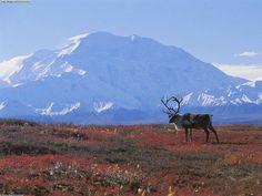 arctic+biome+Tundra