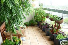 contenants et porte-jardinières pour faire un potager balcon