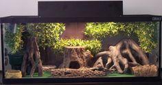 terrarium | Here is my 27 gallon Terrarium for my Various Leopard geckos .