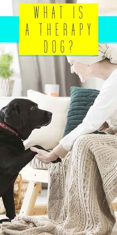what is a therapy dog? Therapy Dog Training, Online Dog Training, Dog Training Courses, Best Dog Training, Therapy Dogs, Fun Facts About Dogs, Dog Facts, Happy Puppy