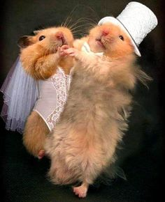 Hamsters' first marriage dance! @Alexis Garriott Rathburn maybe it is FATE