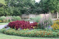 Curvilinear flower bed exploding with color and greenery. Commercial Landscape Design, Commercial Landscaping, Flower Beds, Greenery, Colorful, Flowers, Plants, Plant, Royal Icing Flowers