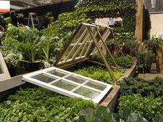 Don't stop gardening just because cold weather hits! Learning how to use a cold frame is a simple and cost-effective way to extend the growing season.