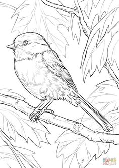 Black-capped Chickadee Coloring page Make your world more colorful with free printable coloring pages from italks. Our free coloring pages for adults and kids. Birds Painting, Animal Drawings, Drawings, State Birds, Bird Coloring Pages, Painting Patterns, Watercolor Bird, Coloring Pages, Color