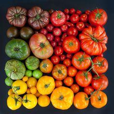 Emily Blincoe tem como tema de suas fotografias, ovos, tomates, laranjas e sorvetes, além de flores e folhas, organizadas por cor e em tons gradientes.