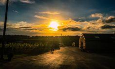 #MySundayPhoto - Vineyard Sunset