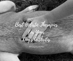 Do you have a dog with arthritis? Holistic and natural therapies to ease inflammation and reduce pain.