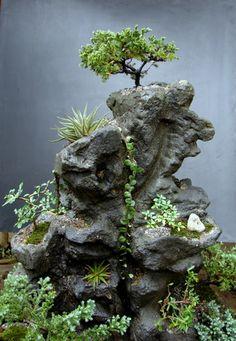 Planta-pedra florianópolis - Pesquisa Google