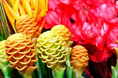 flores exoticas - Pesquisa Google