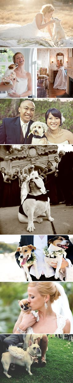 Ways to take wedding pictures with you dog.  I love the one with the bride getting ready.  I have to have at least one shot with Dante.