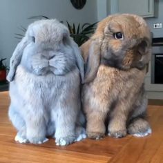 30 Cute Baby Animals That Will Steal Your Heart - Animals Comparison Cute Bunny Pictures, Baby Animals Pictures, Cute Animal Videos, Cute Animal Pictures, Cute Videos, Llama Pictures, Funny Bunny Videos, Funny Pictures, Cute Baby Bunnies
