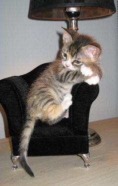 <3 tiny kitty in a tiny chair, awwwww