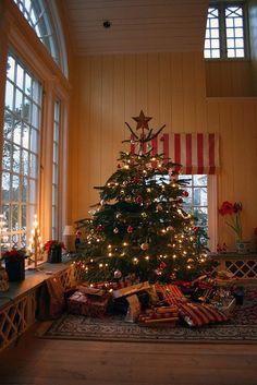 Norwegian Christmas tree / a wide tree vs a tall tree